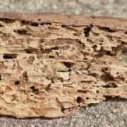 Termite on wood damage